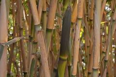 Natuurlijke achtergrond van bamboestelen Stock Fotografie