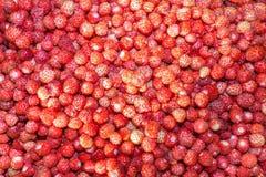 Natuurlijke achtergrond van bessen van rode wilde aardbei Royalty-vrije Stock Afbeeldingen