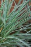 Natuurlijke achtergrond van gras stock afbeeldingen