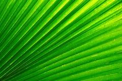 Natuurlijke achtergrond van palmblad Royalty-vrije Stock Foto