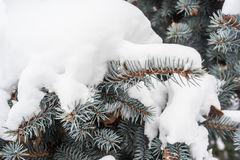 Natuurlijke achtergrond voor blauwe sparappel en naalden onder de sneeuw Royalty-vrije Stock Fotografie