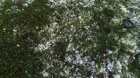 Natuurlijke Berg Wit Moss Covering Hills Above View royalty-vrije stock foto