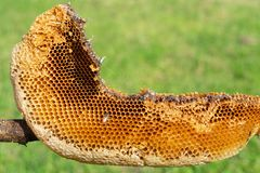 Natuurlijke bijenbijenkorf stock fotografie
