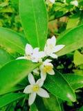 Natuurlijke bloem royalty-vrije stock foto's