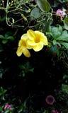 Natuurlijke bloem Royalty-vrije Stock Afbeelding