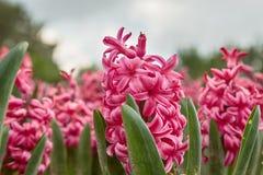 Natuurlijke bloemachtergrond, royalty-vrije stock foto