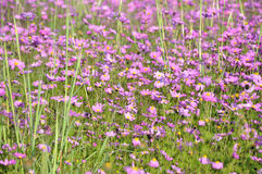 Natuurlijke bloemen Royalty-vrije Stock Fotografie
