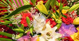 Natuurlijke bloemen Royalty-vrije Stock Afbeelding