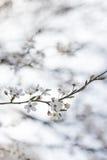 Natuurlijke bloemen Stock Fotografie