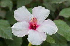 Natuurlijke bloemen royalty-vrije stock afbeeldingen