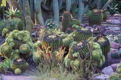 Natuurlijke bloemen Stock Afbeelding