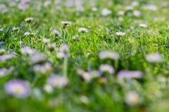 Natuurlijke bloemen Royalty-vrije Stock Foto's