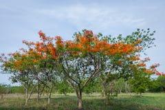 Natuurlijke bloemen en bomen Royalty-vrije Stock Foto's