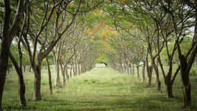 Natuurlijke bloemen en bomen Stock Fotografie