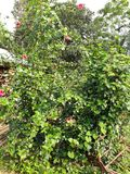 Natuurlijke bloemen r royalty-vrije stock afbeelding