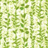 Natuurlijke bloemenachtergrond. Stock Fotografie