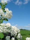 Natuurlijke bloemenachtergrond Stock Foto