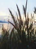 Natuurlijke bloemenachtergrond van zonsondergang Koh Samui Thailand Stock Foto