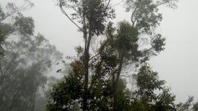 Natuurlijke boom en Natuurlijke rook Royalty-vrije Stock Afbeeldingen