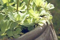 Natuurlijke boombladeren Royalty-vrije Stock Fotografie