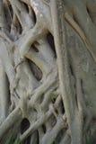 Natuurlijke boomwortels geweven textuur royalty-vrije stock afbeelding