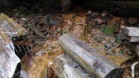 Natuurlijke bron van mineraal curatief water stock footage