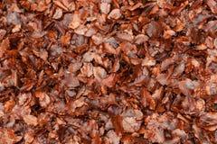 Natuurlijke bruine bladeren in hout stock fotografie