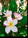 Natuurlijke de bloemtuin van de levensstijlfotografie Royalty-vrije Stock Afbeeldingen