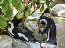 Natuurlijke de dierentuinfotografie van de dierenlevensstijl in Singapore Stock Afbeelding