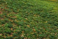 Natuurlijke de herfstachtergrond door het verse gras Royalty-vrije Stock Foto's