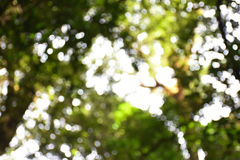 Natuurlijke de kleuren warme achtergrond van Bokeh abstracte groene cirkels met exemplaarruimte Stock Fotografie