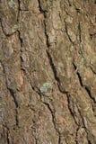 Natuurlijke de schors macrotextuur van de pijnboomboom in hout Stock Foto