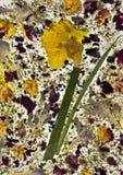 Natuurlijke die document achtergrond van droge bloemen wordt gemaakt Royalty-vrije Stock Foto's