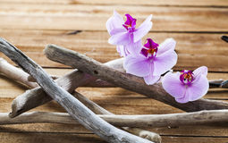 Natuurlijke die elementen voor welzijn en ontspanning worden geplaatst Royalty-vrije Stock Fotografie