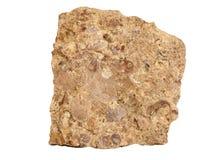 Natuurlijke die steekproef van kalksteen uit de kalkdelen van oude weekdieren, bryozoans en crinoids op witte achtergrond wordt s Stock Foto