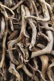 Natuurlijke drijfhoutinzameling Stock Afbeelding