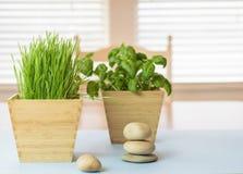 Natuurlijke elementen in het huis voor saldo en goed - zijnd Royalty-vrije Stock Foto