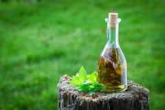 Natuurlijke en eigengemaakte die likeur van munt en alcohol wordt gemaakt royalty-vrije stock foto's