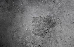 Natuurlijke gemaakte muur van klei en zand met gedrukte bladdruk Stock Afbeelding