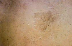 Natuurlijke gemaakte muur van klei en zand met gedrukte bladdruk Royalty-vrije Stock Afbeeldingen
