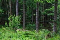 Natuurlijke gemengde tribune van Bieszczady-Bergketen royalty-vrije stock foto's