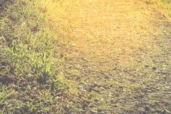 Natuurlijke gouden gang met rots en gras, selectieve nadruk, Aardconcept Stock Fotografie