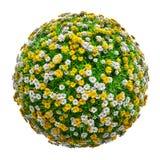 Natuurlijke grasarena met bloemen Stock Afbeelding