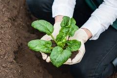 Natuurlijke groen Stock Afbeeldingen