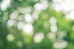 Natuurlijke Groene Abstracte Bokeh-Achtergrond Royalty-vrije Stock Afbeelding