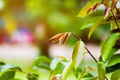Natuurlijke groene Achtergrond royalty-vrije stock foto's