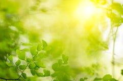 Natuurlijke groene Achtergrond Stock Afbeeldingen