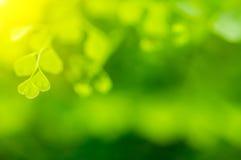 Natuurlijke groene Achtergrond Stock Foto's