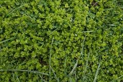 Natuurlijke groene achtergrond met dauwdalingen Hoogste mening stock fotografie