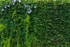 Natuurlijke groene achtergrond met purpere bloemen royalty-vrije stock afbeelding